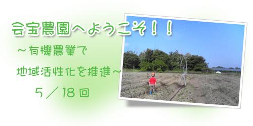 ブログ背景5.jpg