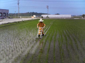 水田除草4-1.jpg