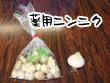 薬用ニンニク_1.jpg