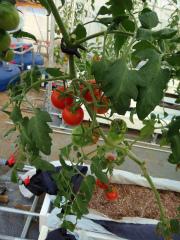 農業20121102-1.jpg