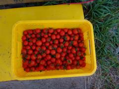 農業20121102-3.jpg