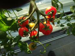 農業20130520-1.jpg